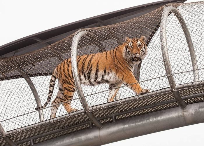 Metal Network Stainless Steel Tiger Wire Mesh / Big Cat Crossing Mesh
